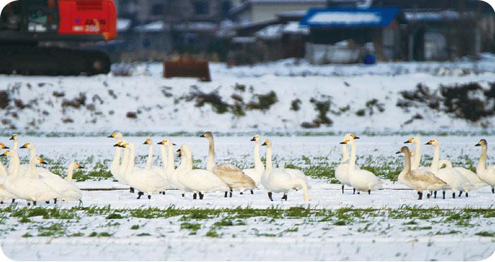 琵琶湖水鳥・湿地センター 湖北野鳥センター