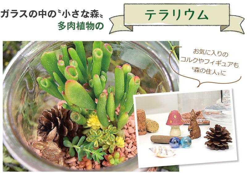 ガラスの中の〝小さな森〟多肉植物のテラリウム