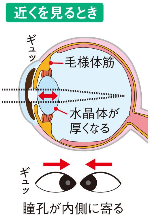 近くを見るとき=瞳孔が内側に寄る
