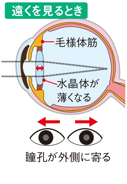 遠くを見るとき=瞳孔が外側に寄る